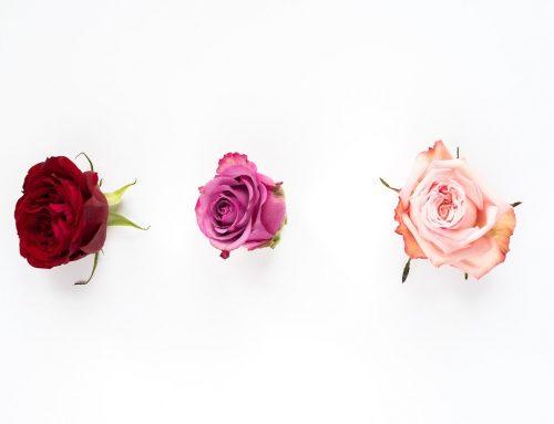 Floral Guide Vol. 1