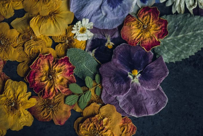 colorful bunch of pressed flowers