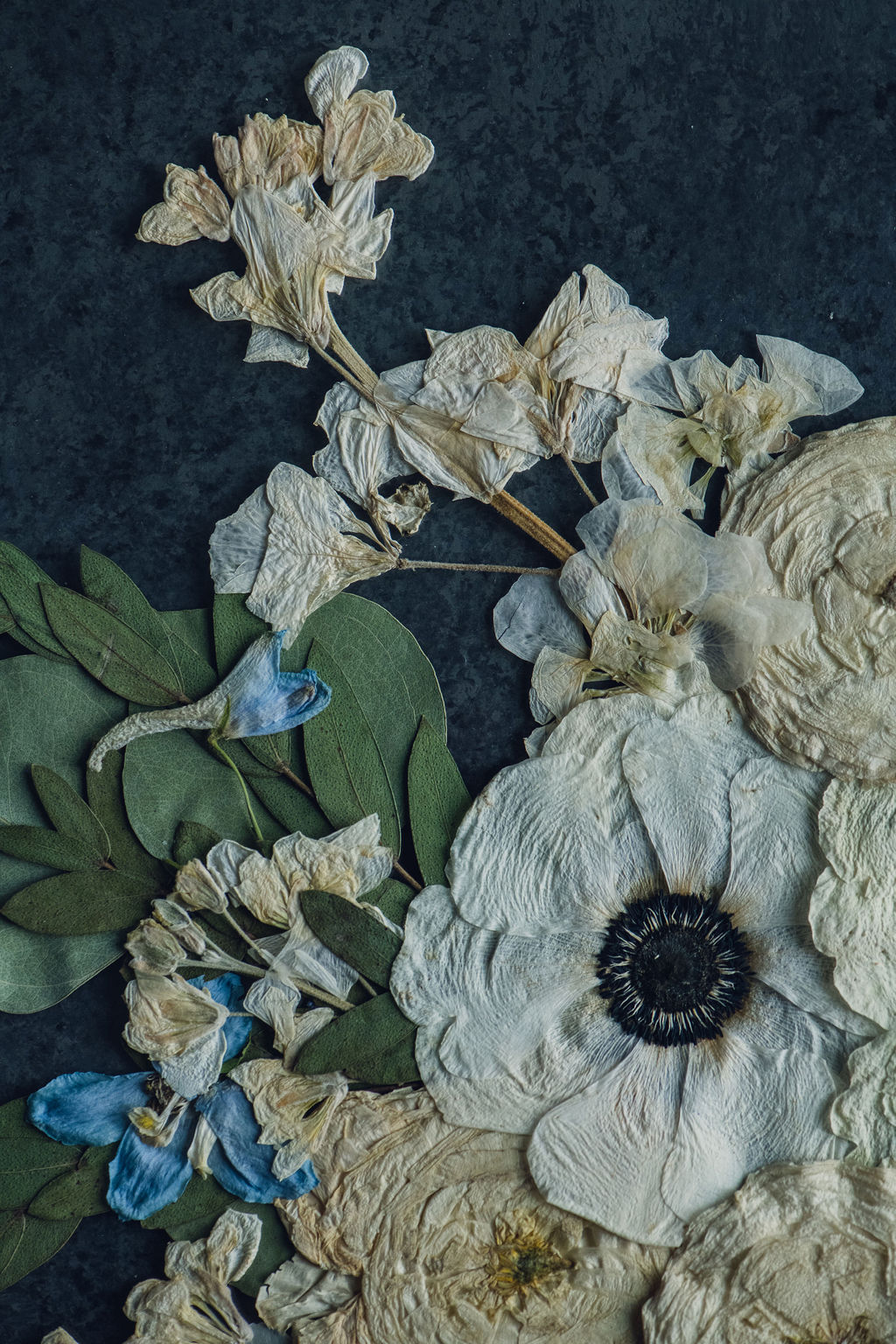 pressed flower art with anemone and delphinium