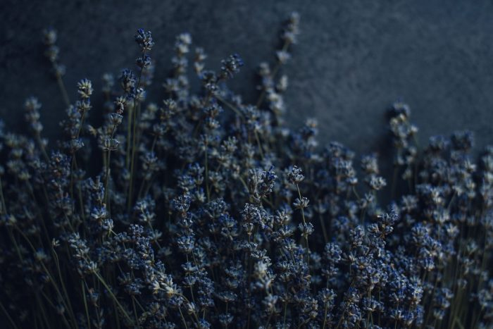 large bunch lavender laying on a dark background