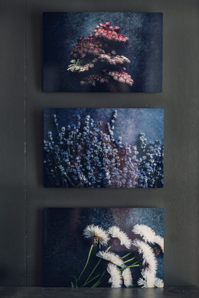 vertical set of three flowers: chocolate lace, lavender and white thistle