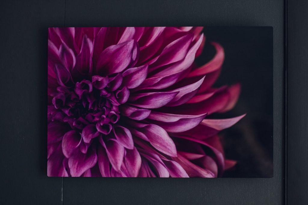 close up view of a magenta dahlia print wall art