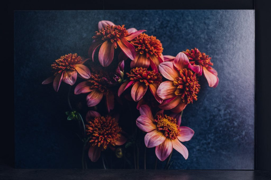 vibrant red orange dahlias printed on standout