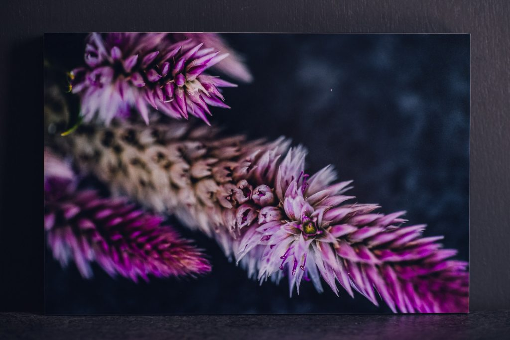 intricate detail of a magenta celosia printed wall art