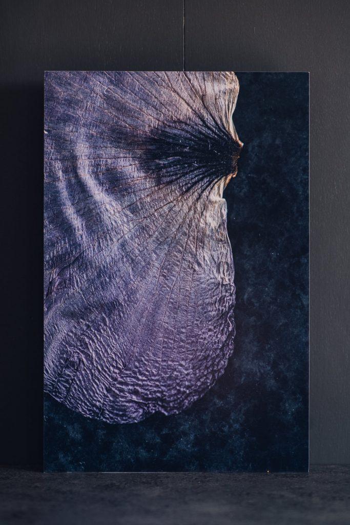 macro photo of a purple tulip petal printed on standout as wall art