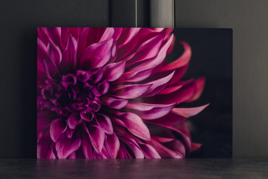 magenta dahlia printed on vivid metal