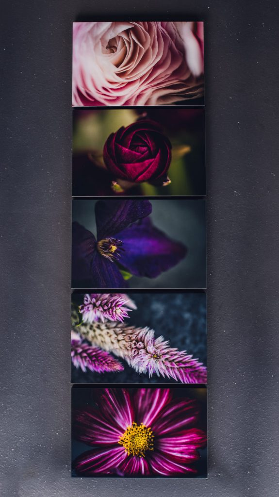Set of five vibrant flowers in a wall art collection