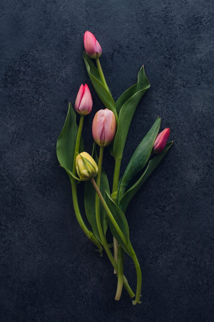 small bunch of pink and yellow tulips curving on a dark background