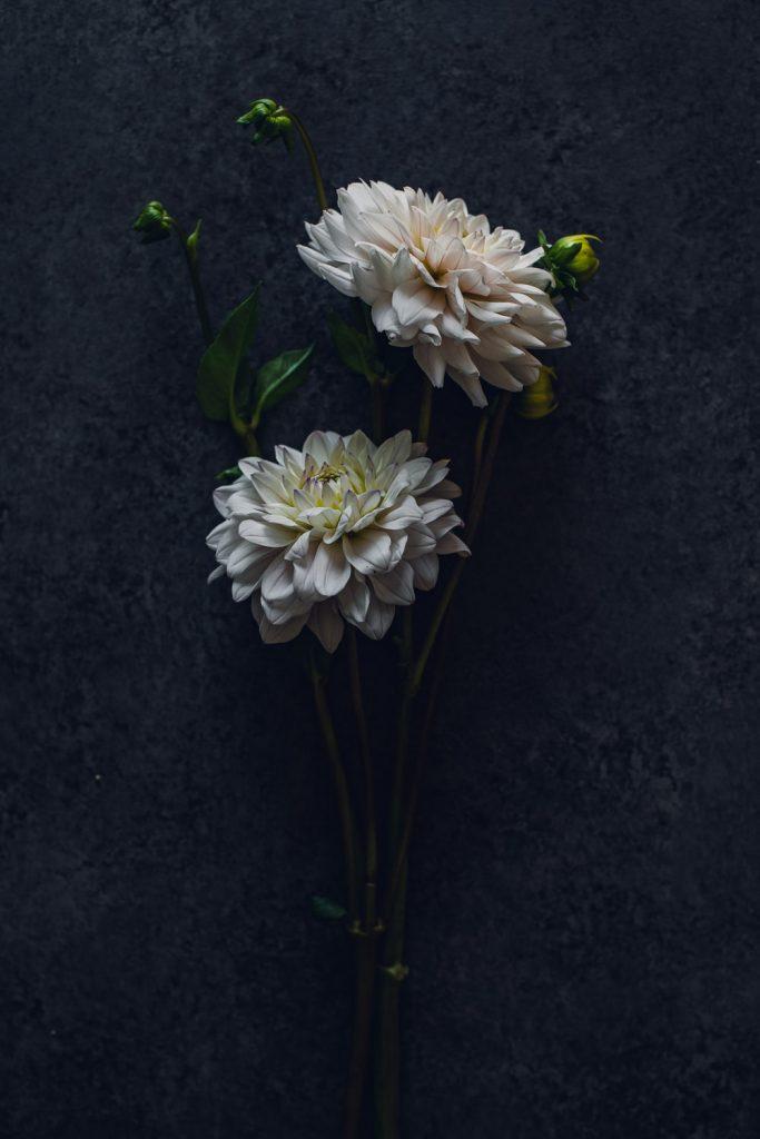 white blush dahlias