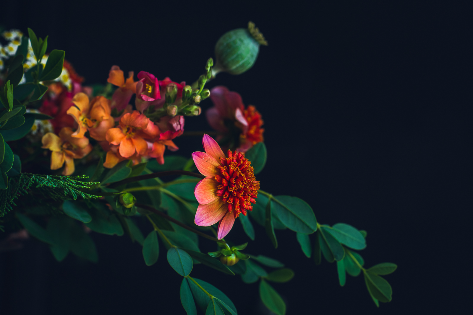red orange dahlia in an autumn centerpiece with snapdragons and a poppy pod