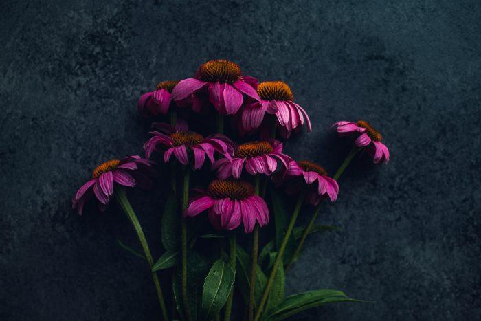 bunch of magenta echinacea