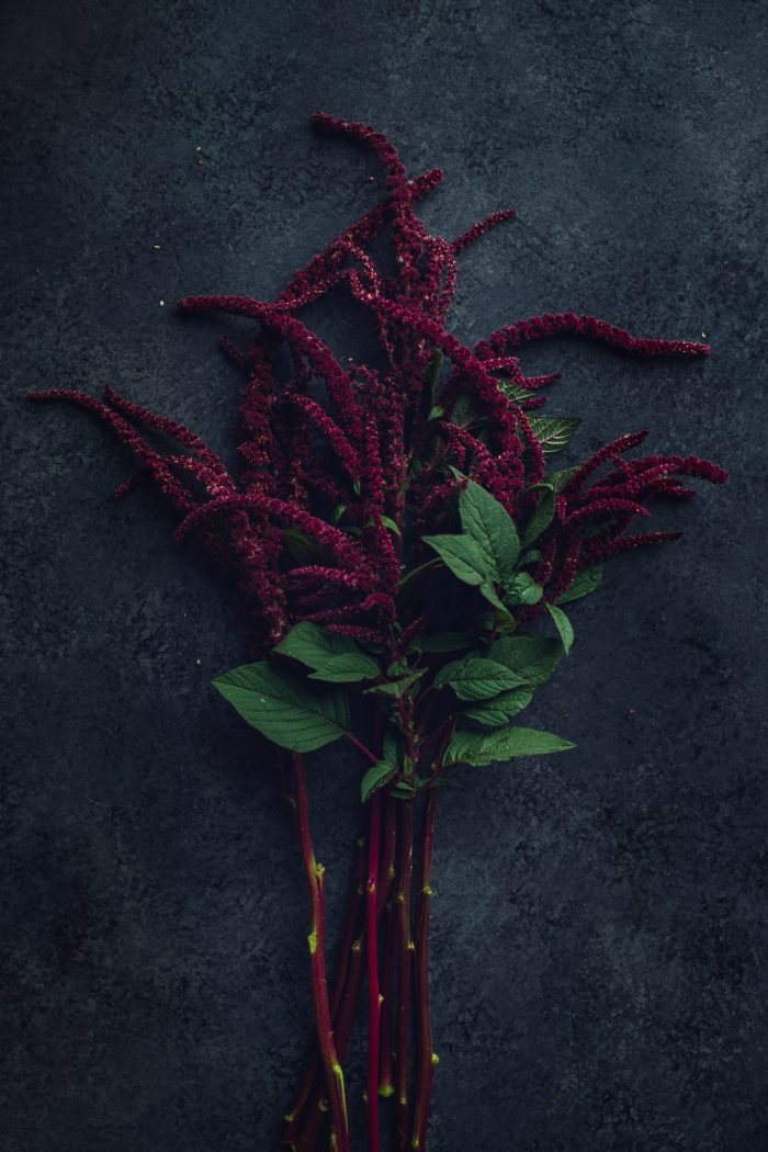 burgundy amaranthus bunch