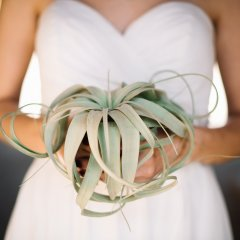 Minimalist Air Plant Bouquet