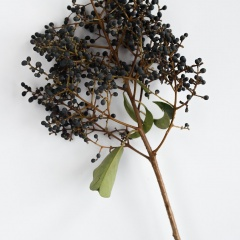 Privet Berry